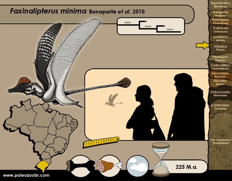Faxinalipterus minima