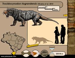 Trucidocynodon riograndensis
