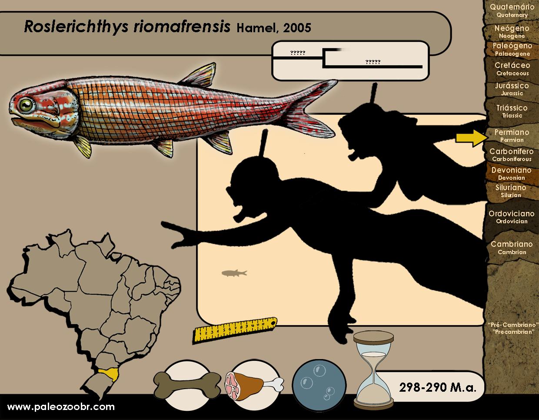 Roslerichthys riomafrensis