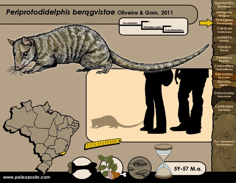 Periprotodidelphis berqgvistae