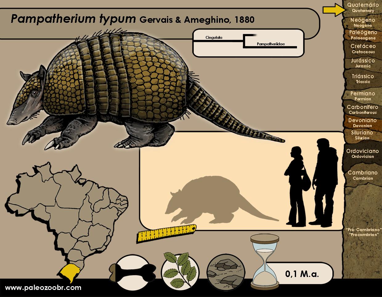 Pampatherium typum