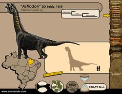 Astrodon sp