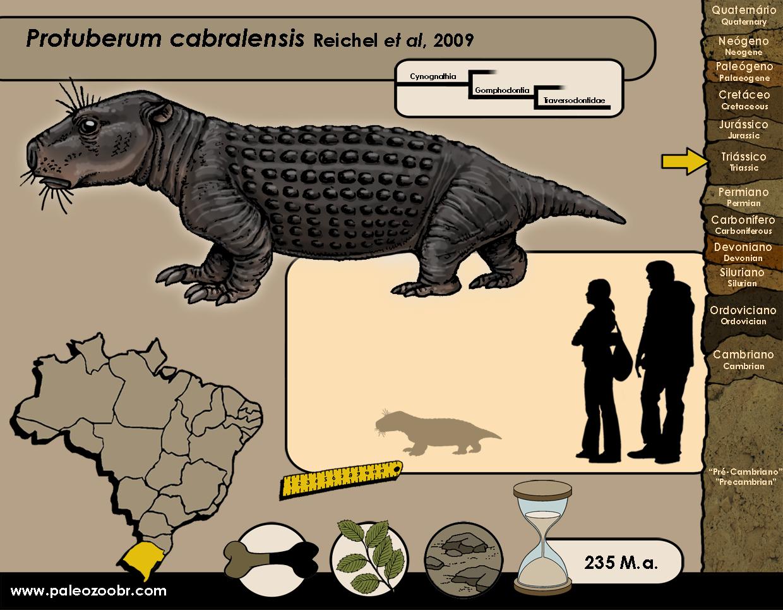 Protuberum cabralensis