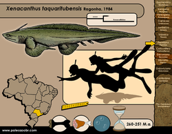 Xenacanthus taquaritubensis
