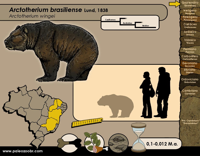 Arctotherium brasiliense