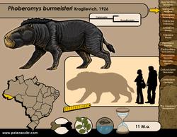 Phoberomys burmeisteri