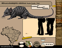 Minusculodelphis minimus