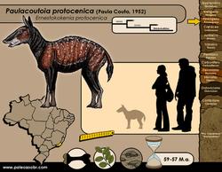 Paulacoutoia protocenica