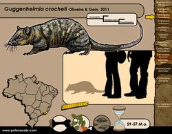 Guggenheimia crocheti