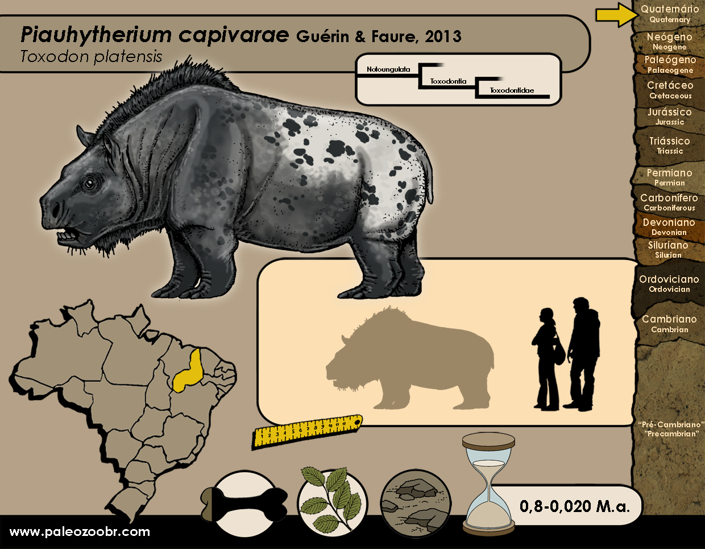 Piauhytherium capivarae