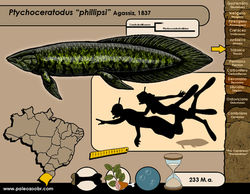 Ptychoceratodus phillipsi