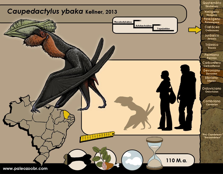 Caupedactylus ybaka