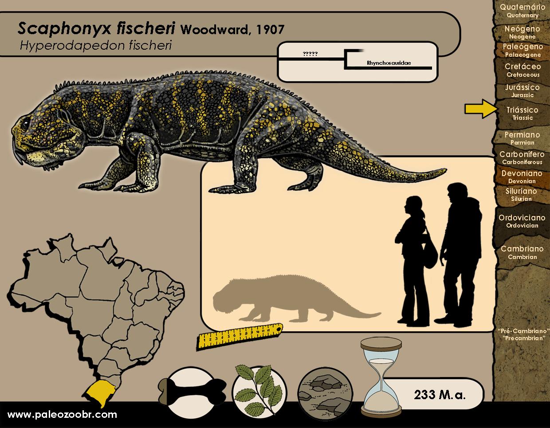 Scaphonyx fischeri