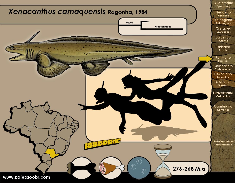 Xenacanthus camaquensis