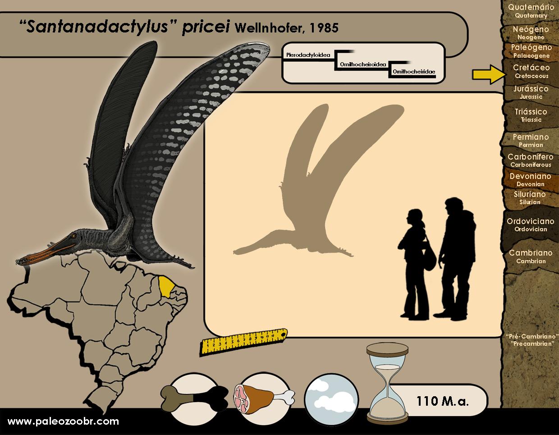 Santanadactylus pricei