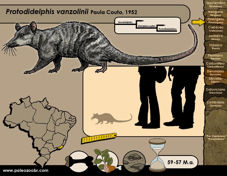 Protodidelphis vanzolinii