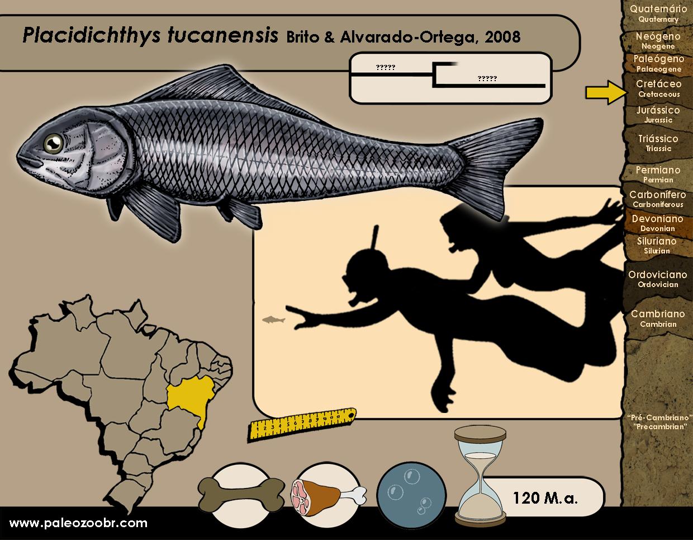 Placidichthys tucanensis