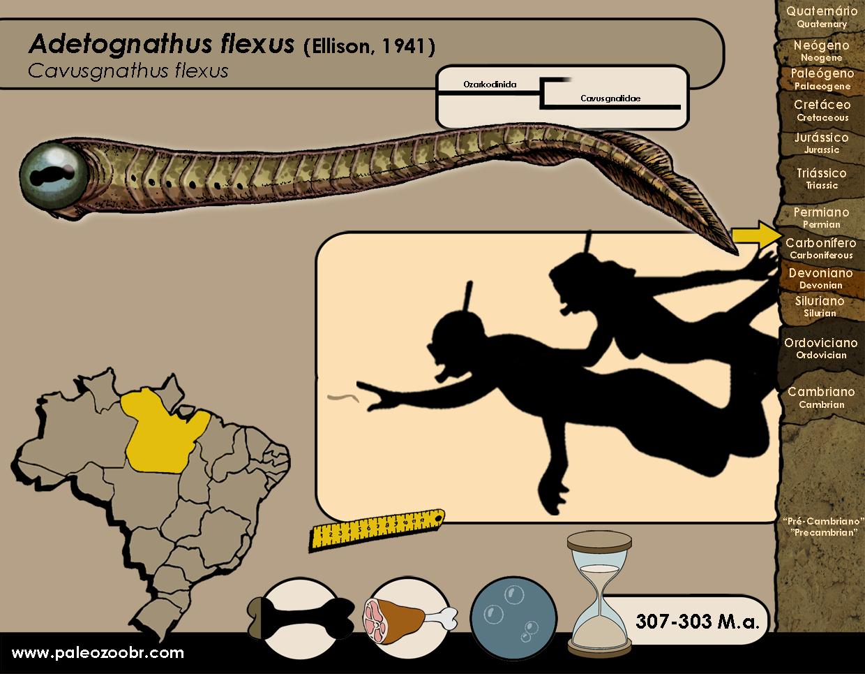 Adetognathus flexus