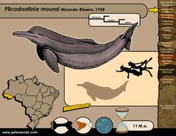 Plicodontinia mourai