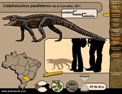Caipirasuchus paulistanus