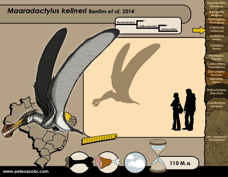 Maaradactylus kellneri