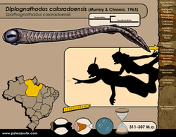 Diplognathodus coloradoensis
