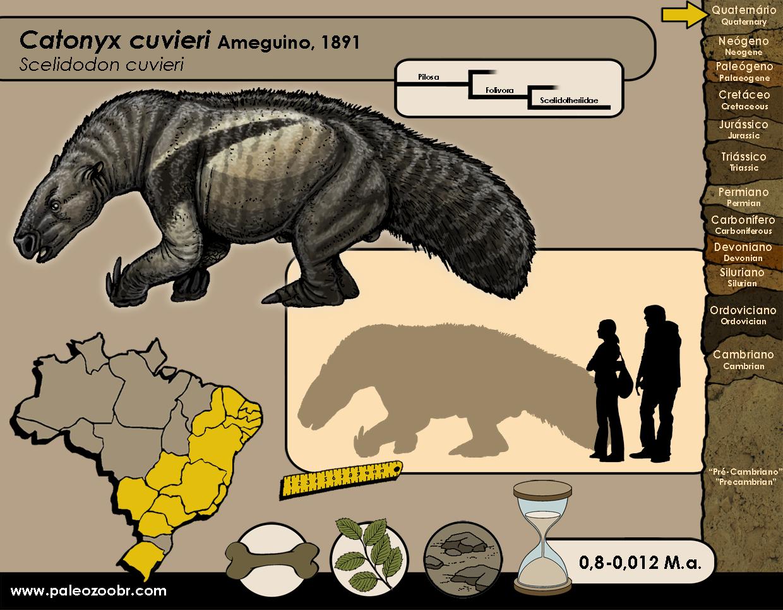 Catonyx cuvieri