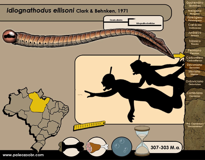 Idiognathodus ellisoni