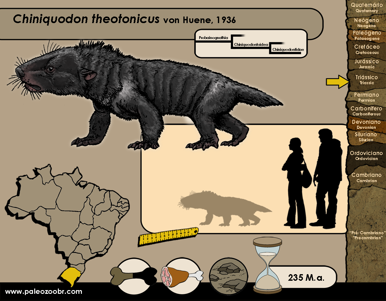 Chiniquodon theotonicus