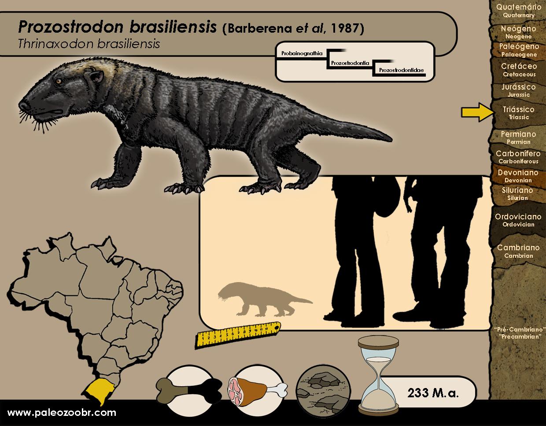 Prozostrodon brasiliensis