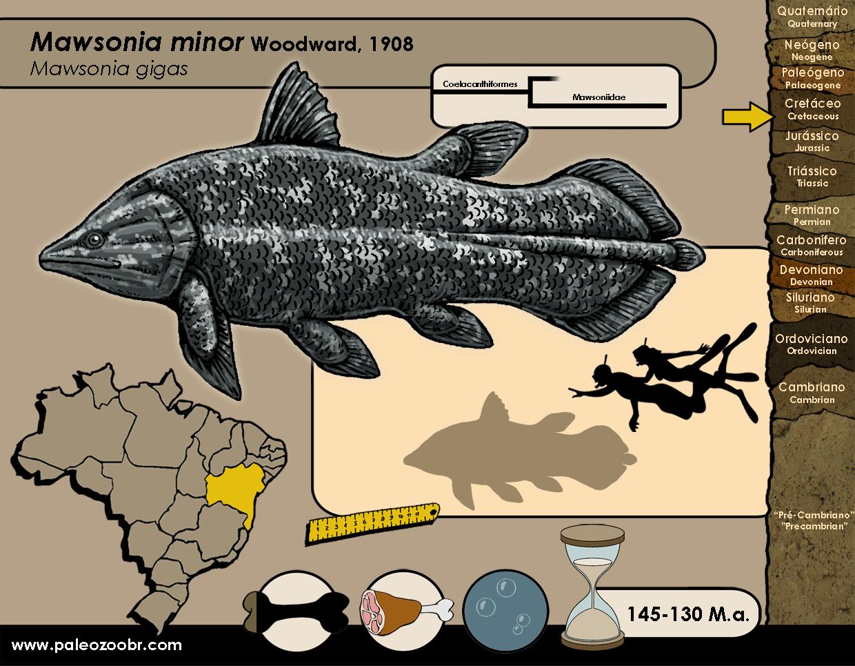 Mawsonia minor