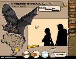 Mormopterus faustoi