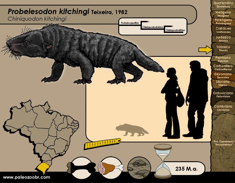 Probelesodon kitchingi