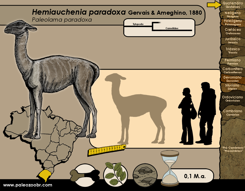 Hemiauchenia paradoxa