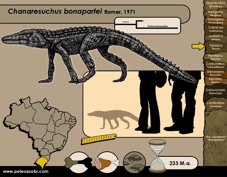 Chanaresuchus bonapartei