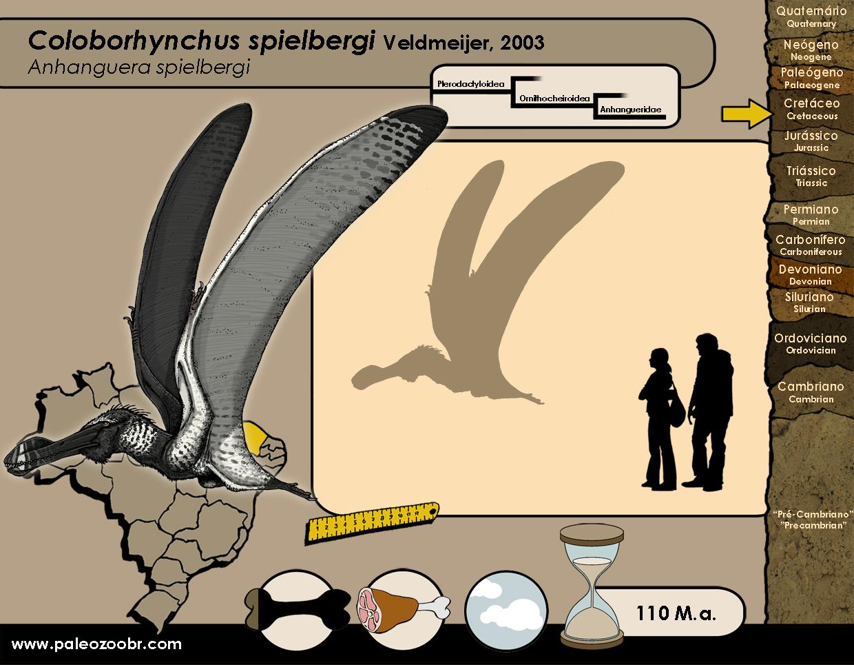 Coloborhynchus spielbergi