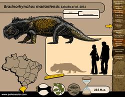 Brasinorhynchus mariantensis