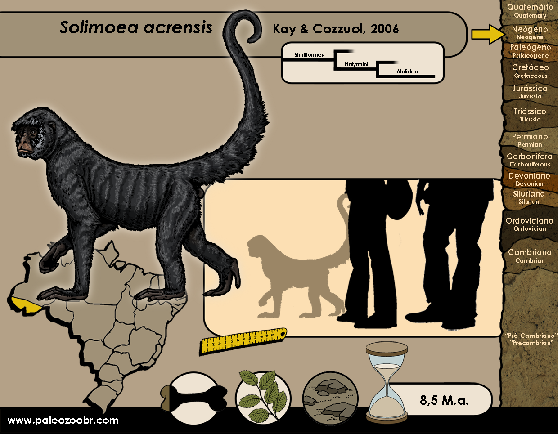 Solimoea acrensis