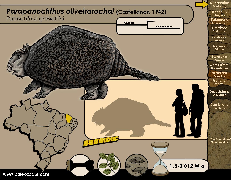 Parapanochthus oliveirarochai