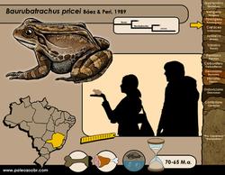 Baurubatrachus pricei