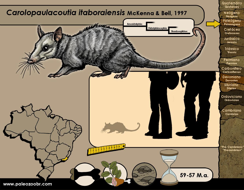 Carolopaulacoutia itaboraiensis