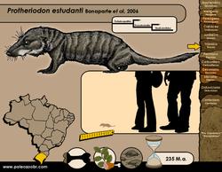 Protheriodon estudanti