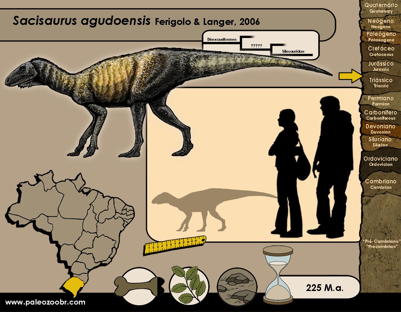 Sacisaurus agudoensis
