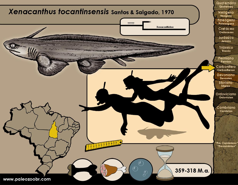 Xenacanthus tocantinsensis