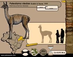 Paleolama niedae