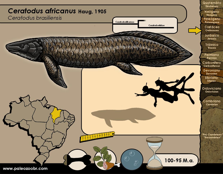 Ceratodus africanus