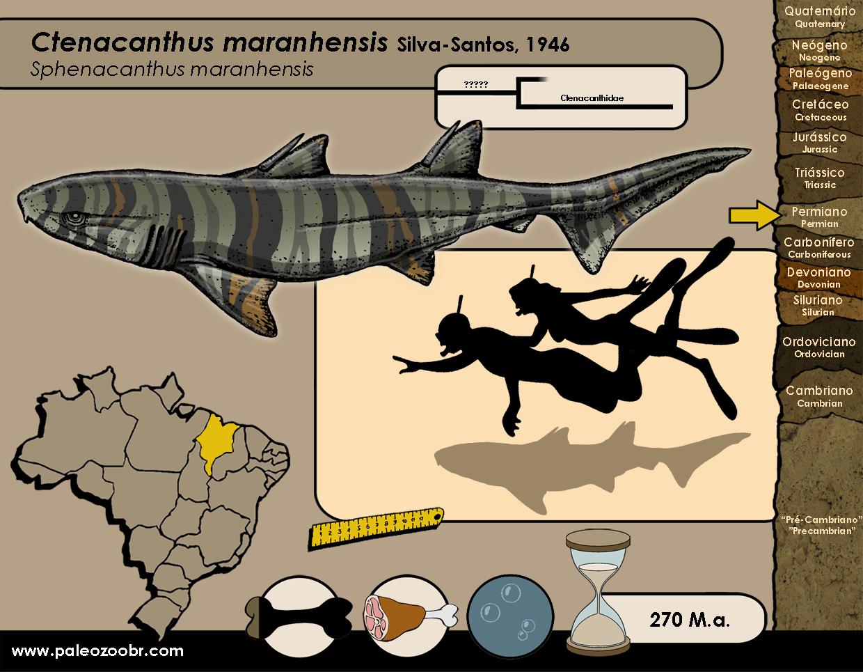 Ctenacanthus maranhensis