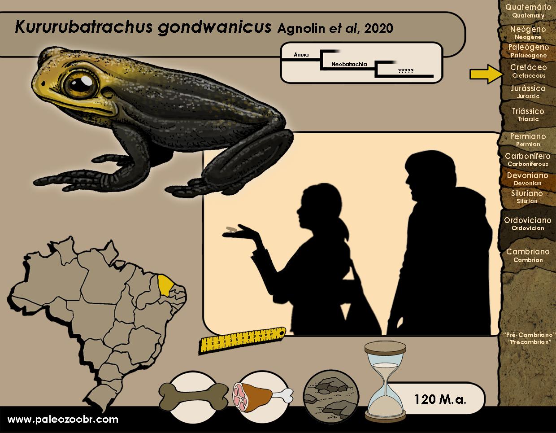Kururubatrachus gondwanicus