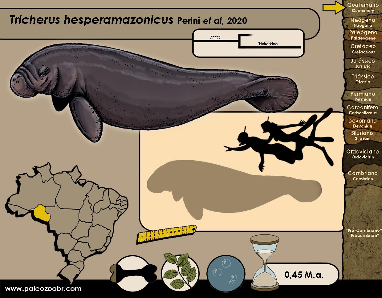 Tricherus hesperamazonicus