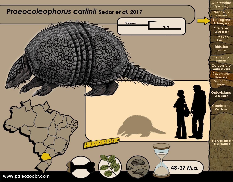 Proeocoleophorus carlinii